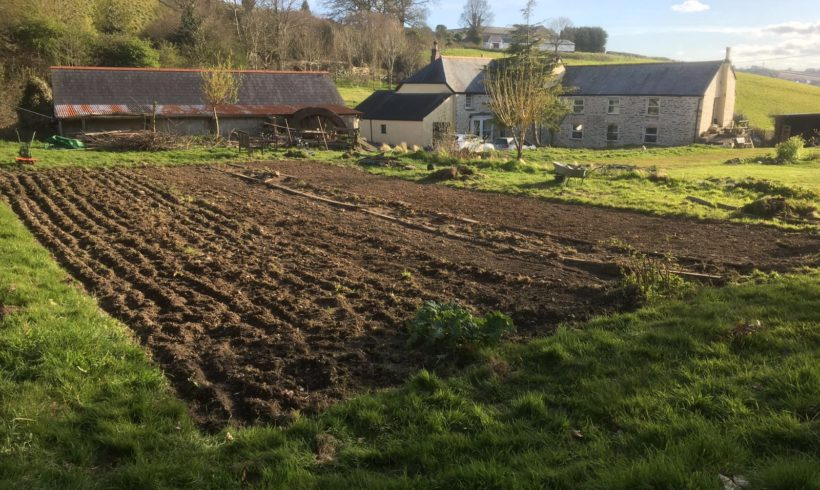 Progress update on our community food growing scheme